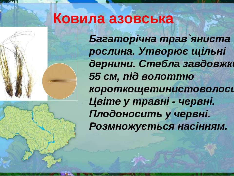 Ковила азовська Багаторічна трав`яниста рослина. Утворює щільні дернини. Стеб...