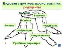 Видовая структура