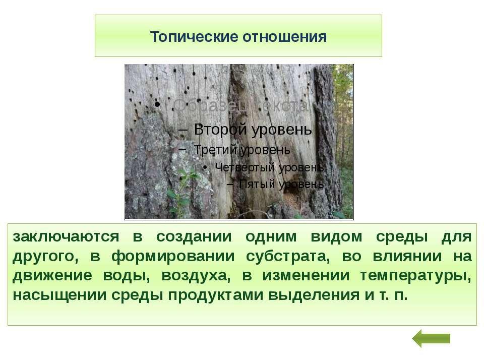 Топические отношения заключаются в создании одним видом среды для другого, в ...