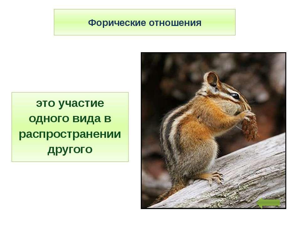 Форические отношения это участие одного вида в распространении другого