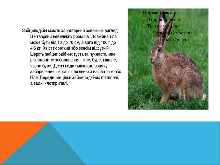 Зайцеподібні мають характерний зовнішній вигляд. Це тварини невеликих розмірі...