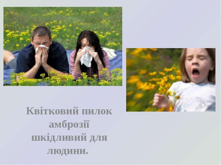 Квітковий пилок амброзії шкідливий для людини.