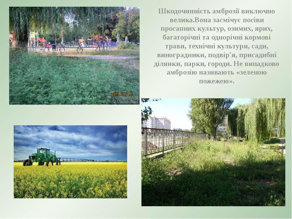 Шкодочинність амброзії виключно велика.Вона засмічує посіви просапних культур...