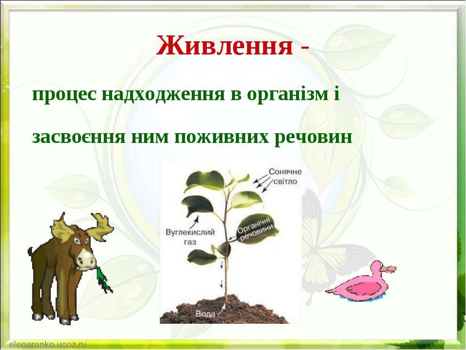 Живлення - процес надходження в організм і засвоєння ним поживних речовин