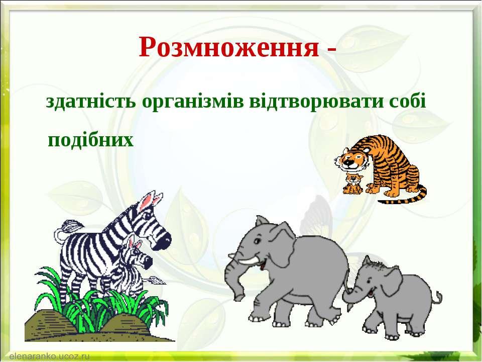 Розмноження - здатність організмів відтворювати собі подібних