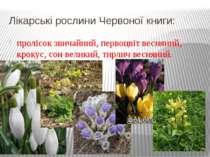 Лікарські рослини Червоної книги: пролісок звичайний, первоцвіт весняний, кро...