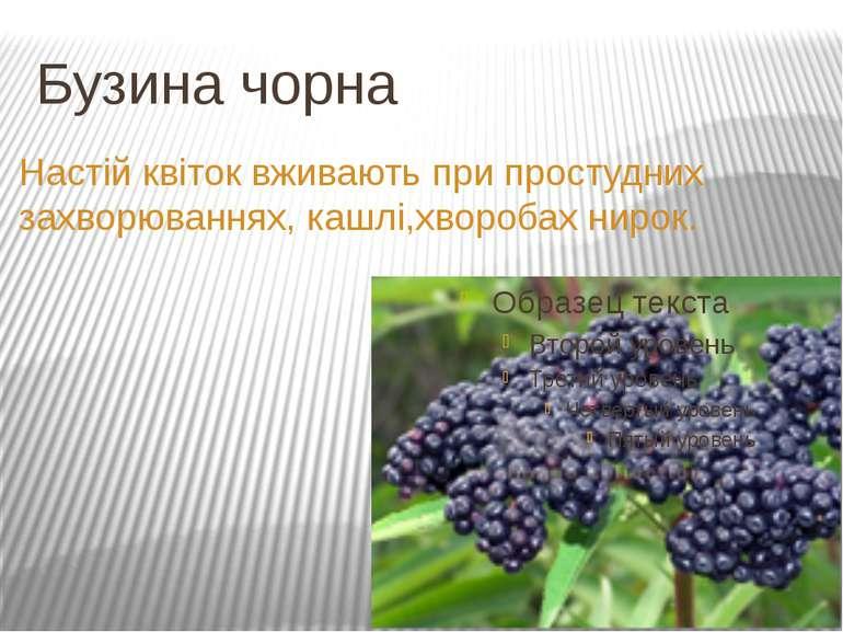 Бузина чорна Настій квіток вживають при простудних захворюваннях, кашлі,хворо...