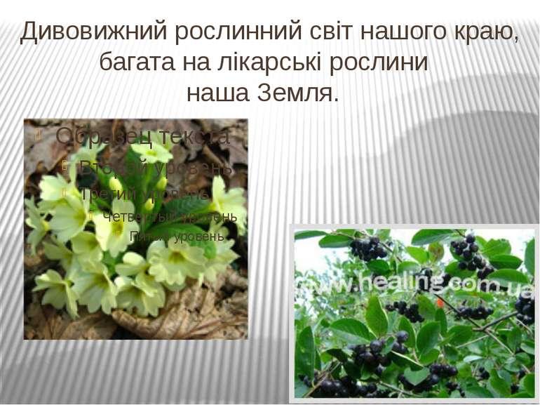Дивовижний рослинний світ нашого краю, багата на лікарські рослини наша Земля.