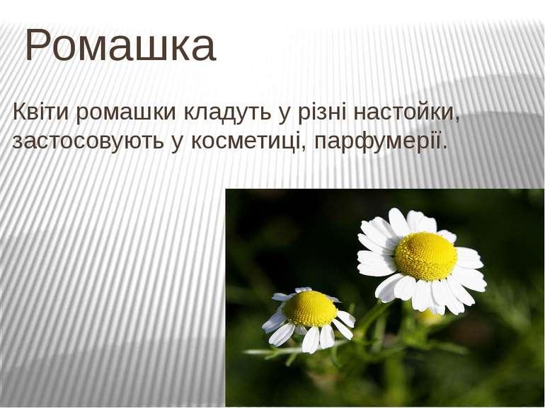 Ромашка Квіти ромашки кладуть у різні настойки, застосовують у косметиці, пар...
