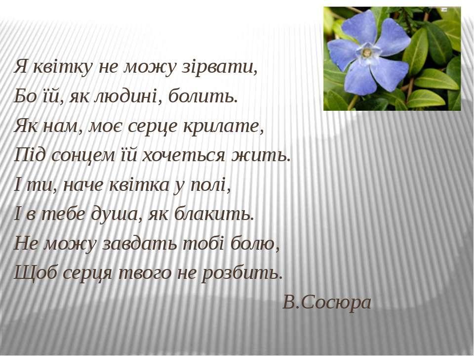 Я квітку не можу зірвати, Бо їй, як людині, болить. Як нам, моє серце крилате...