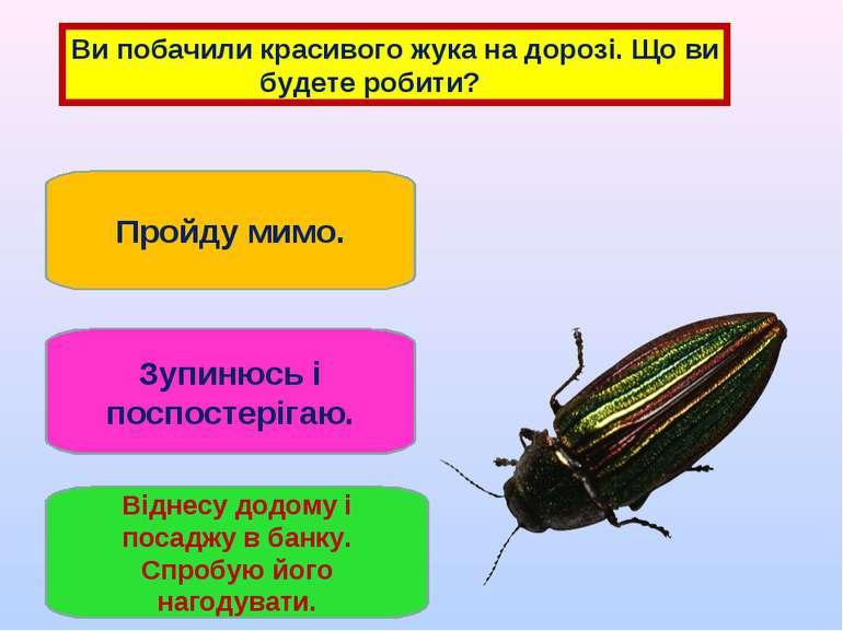 Ви побачили красивого жука на дорозі. Що ви будете робити? Пройду мимо. Зупин...