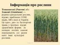 Теслюк Л.П. Інформація про рослини Тонконогові (Poaceae) або Злакові (Gramine...