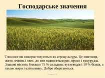 Теслюк Л.П. Господарське значення Тонконогові використовуються як агрокультур...