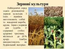 Теслюк Л.П. Зернові культури Найвідоміші серед злаків різноманітні зернові ку...