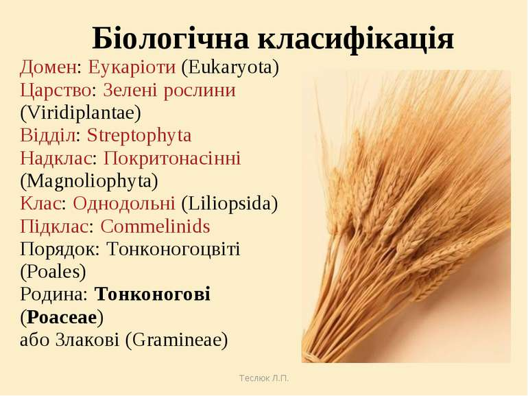 Теслюк Л.П. Біологічна класифікація Домен: Еукаріоти (Eukaryota) Царство: Зел...