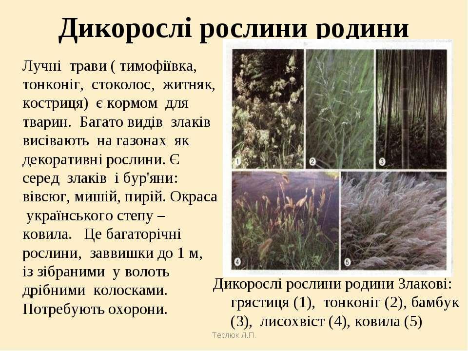 Теслюк Л.П. Дикорослі рослини родини Дикорослі рослини родини Злакові: грясти...