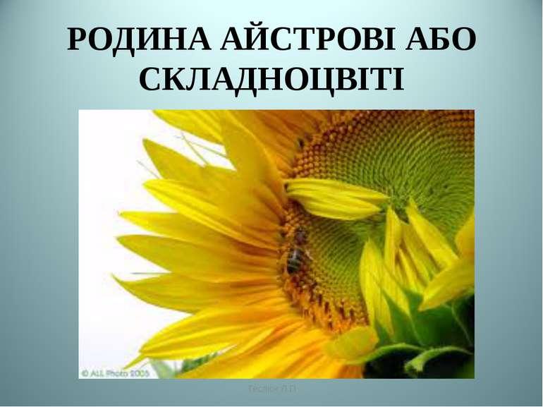 РОДИНА АЙСТРОВІ АБО СКЛАДНОЦВІТІ Теслюк Л.П Теслюк Л.П