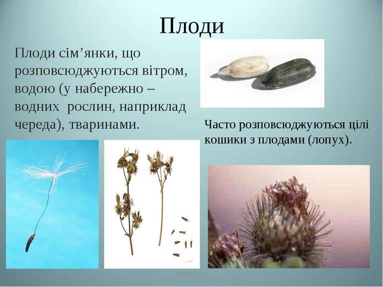 Плоди Плоди сім'янки, що розповсюджуються вітром, водою (у набережно – водних...