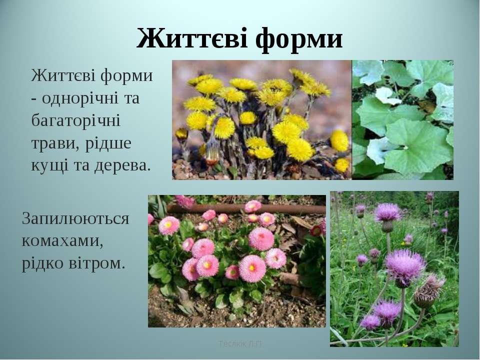 Життєві форми Життєві форми - однорічні та багаторічні трави, рідше кущі та д...