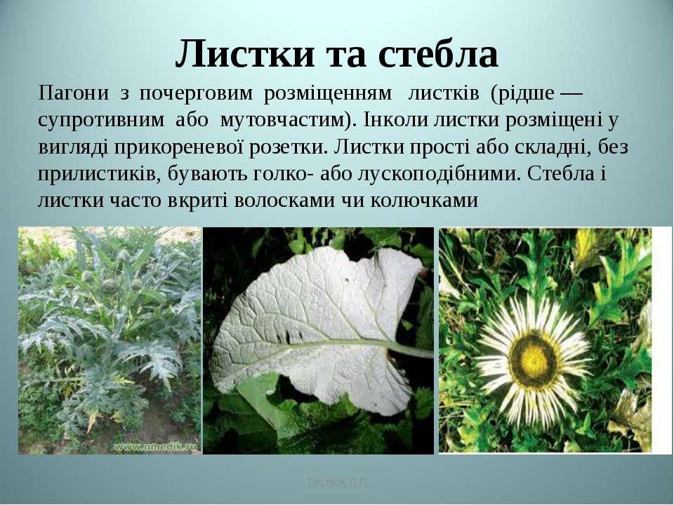 Листки та стебла Пагони з почерговим розміщенням листків (рідше—супротивним ...