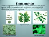 Типи листків пірчастоскладні пальчастоскладні трійчастоскладні Теслюк Л.П Лис...