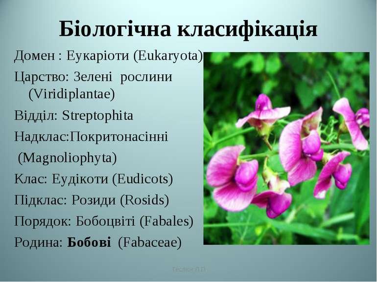 Біологічна класифікація Домен : Еукаріоти (Eukaryota) Царство: Зелені рослини...