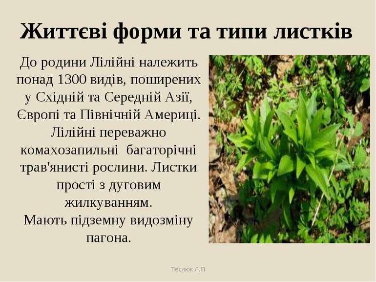 Життєві форми та типи листків До родини Лілійні належить понад 1300 видів, по...