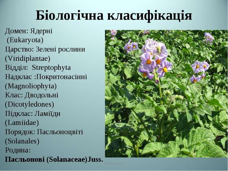 Біологічна класифікація Домен: Ядерні (Eukaryota) Царство: Зелені рослини (Vi...