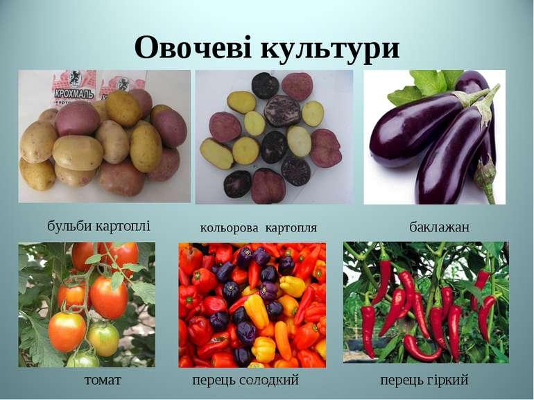 Овочеві культури бульби картоплі баклажан томат перець солодкий перець гіркий...