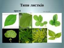 Типи листків прості складні Теслюк Л.П