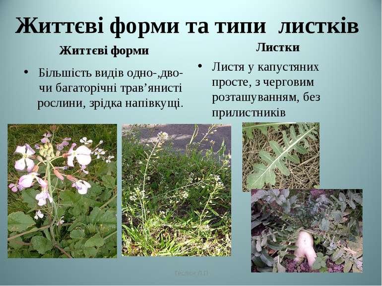 Життєві форми та типи листків Життєві форми Більшість видів одно-,дво- чи баг...