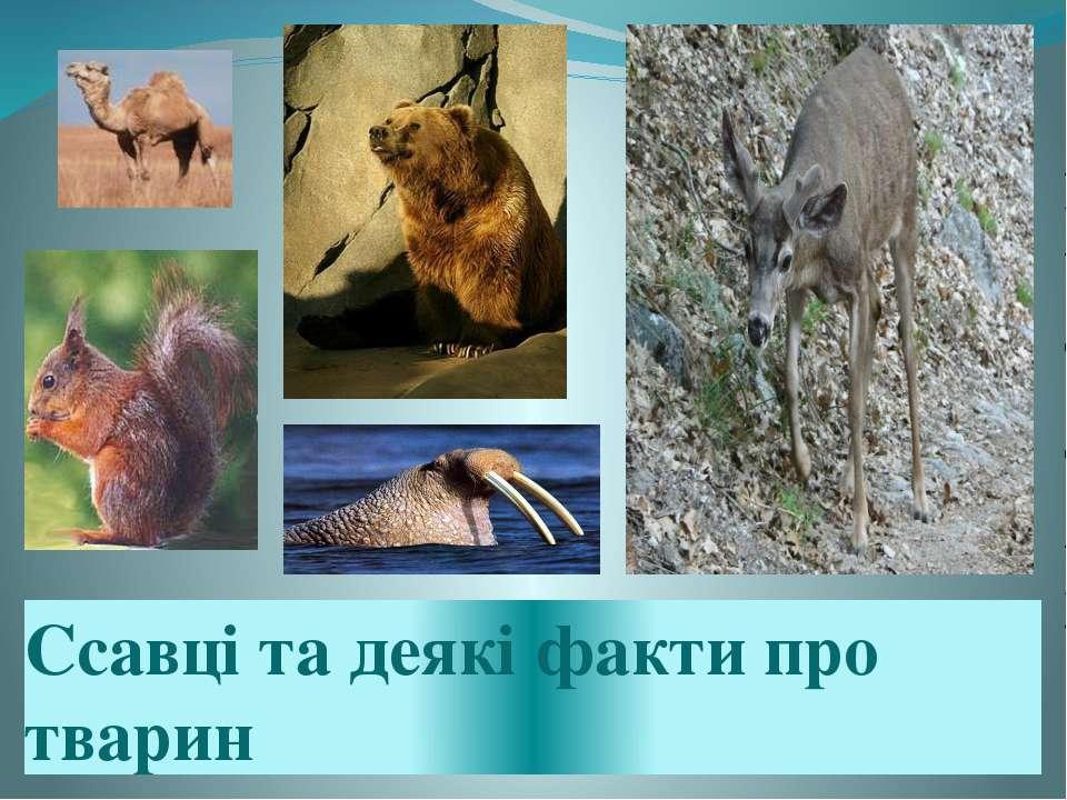 Ссавці та деякі факти про тварин
