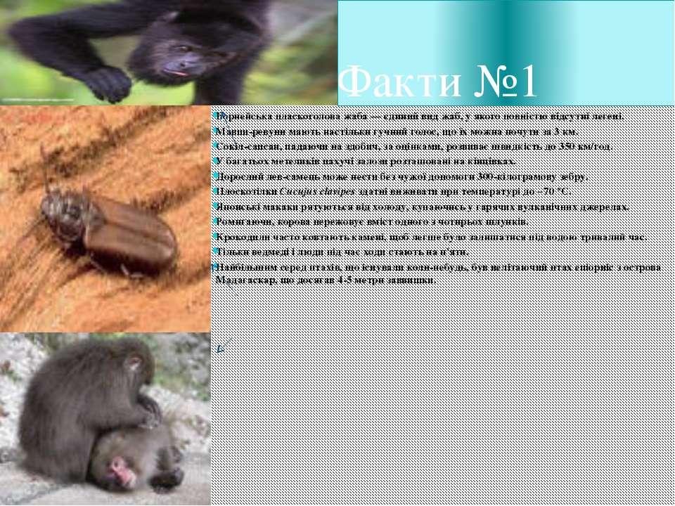 Факти №1 Борнейська пласкоголова жаба— єдиний вид жаб, у якого повністю відс...