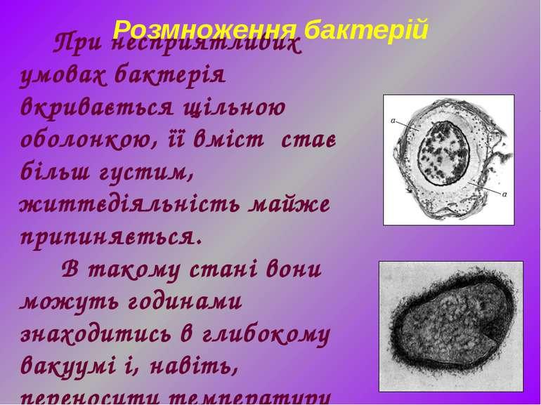 При несприятливих умовах бактерія вкривається щільною оболонкою, її вміст ста...