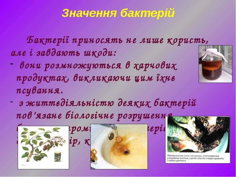Бактерії приносять не лише користь, але і завдають шкоди: вони розмножуються ...