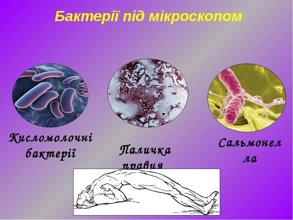 Сальмонелла Паличка правця Бактерії під мікроскопом Кисломолочні бактерії