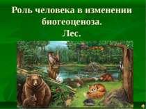 Роль человека в изменении биогеоценоза. Лес.