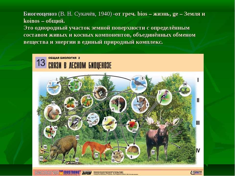 Биогеоценоз (В. Н. Сукачёв, 1940) -от греч. bios – жизнь, ge – Земля и koinos...