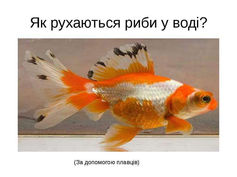 Як рухаються риби у воді? (За допомогою плавців)