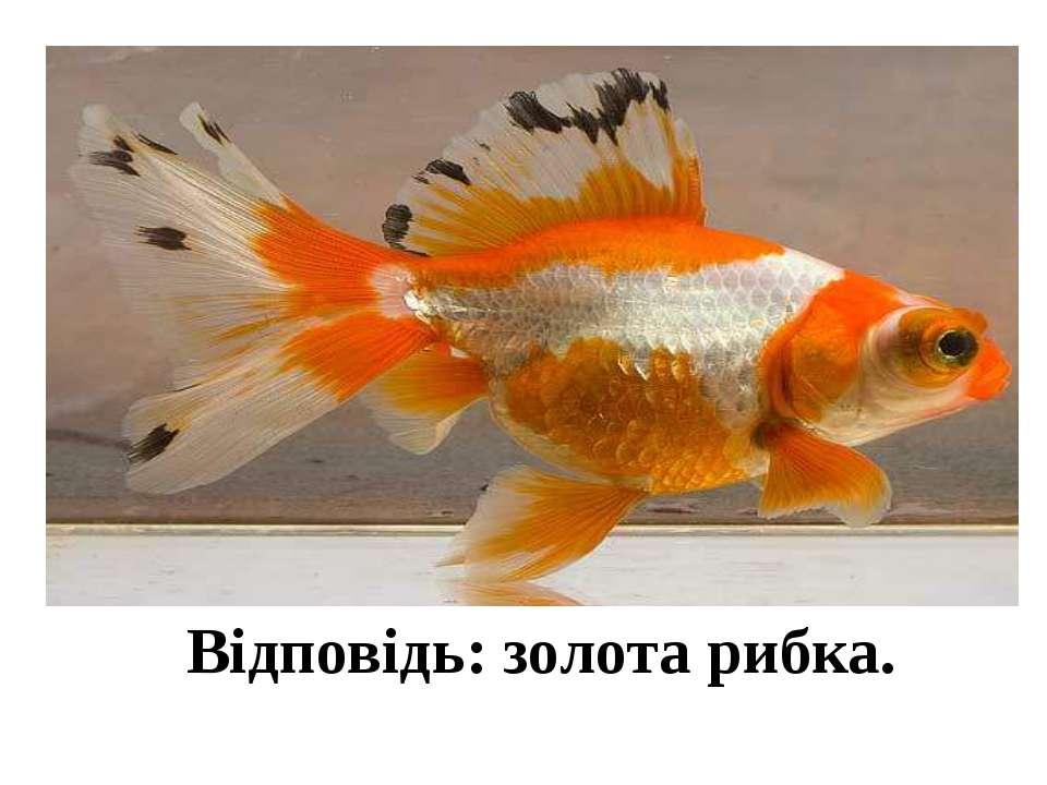 Відповідь: золота рибка.