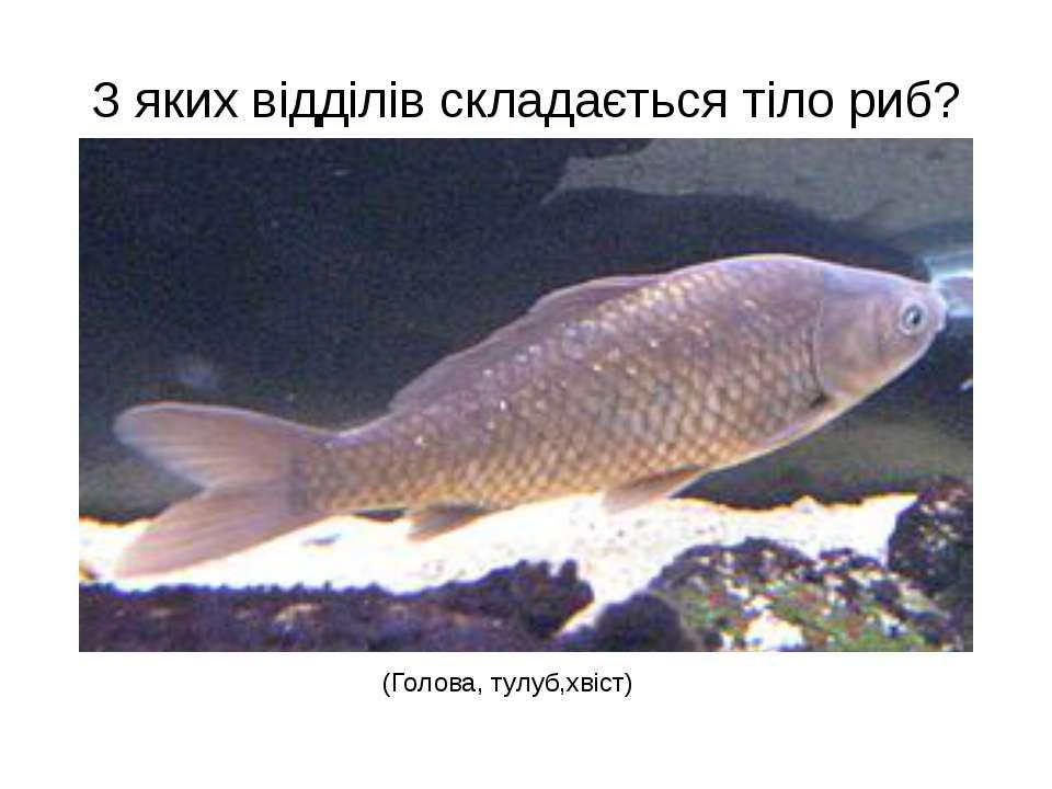 З яких відділів складається тіло риб? (Голова, тулуб,хвіст)