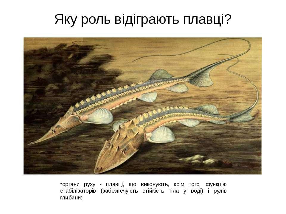 Яку роль відіграють плавці? органи руху - плавці, що виконують, крім того, фу...