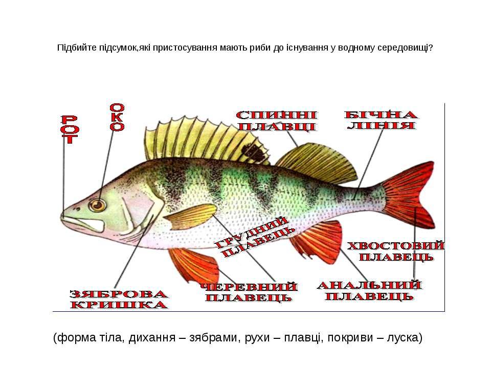 Підбийте підсумок,які пристосування мають риби до існування у водному середов...