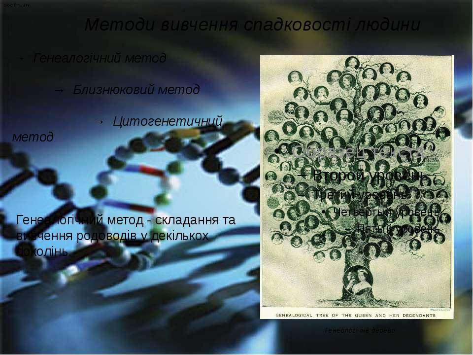 Методи вивчення спадковості людини → Генеалогічний метод → Близнюковий метод ...