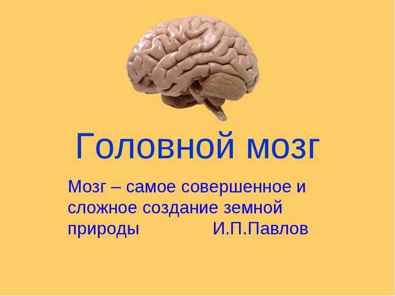 Головной мозг Мозг – самое совершенное и сложное создание земной природы И.П....