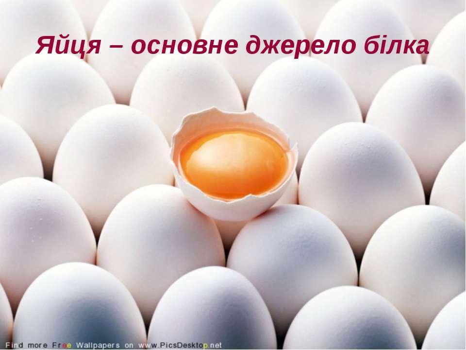 Яйця – основне джерело білка