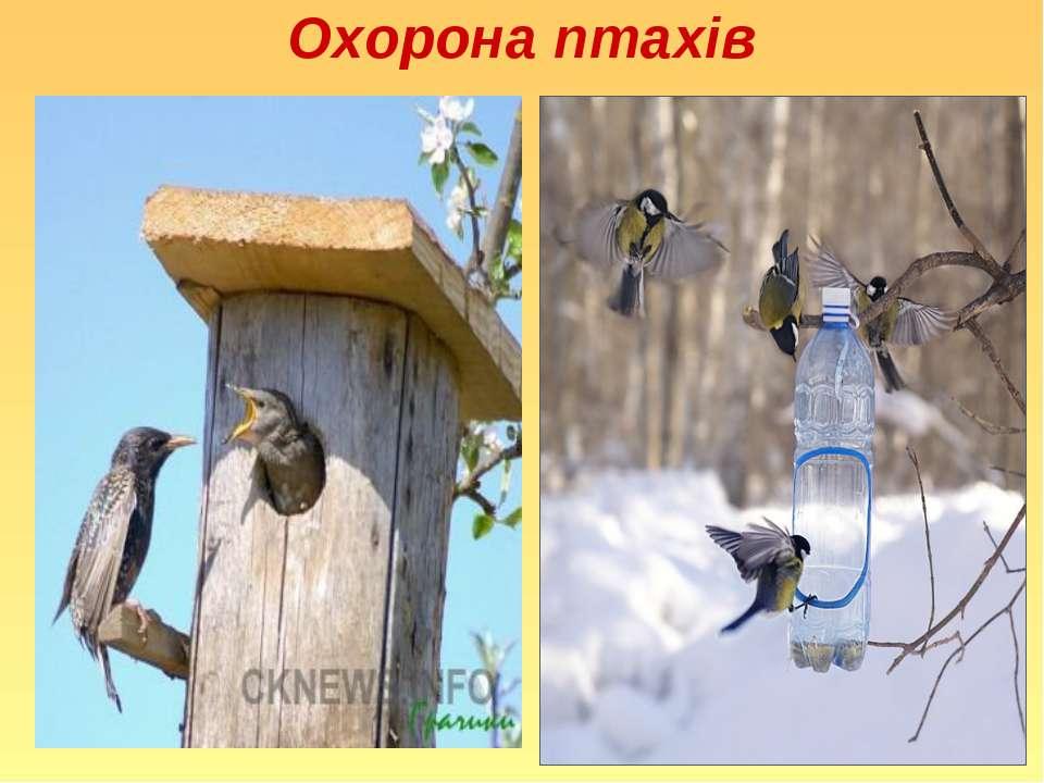 Охорона птахів
