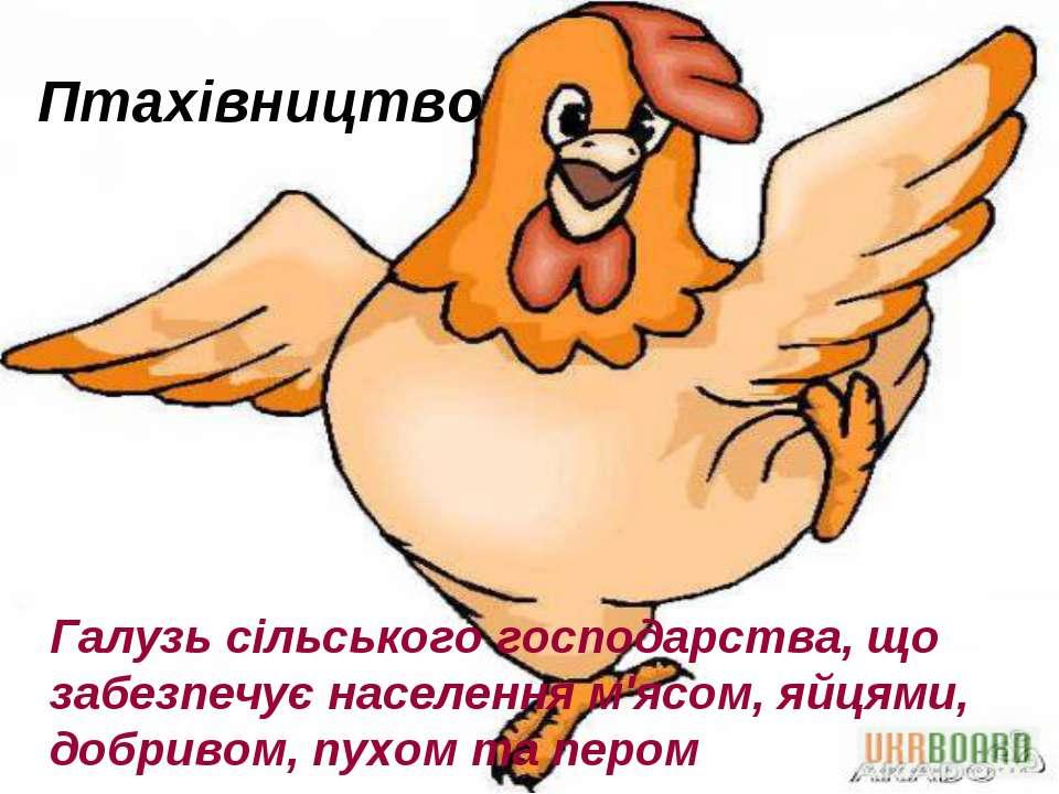 Птахівництво Галузь сільського господарства, що забезпечує населення м'ясом, ...