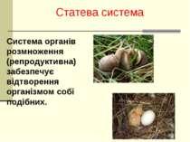 Статева система Система органів розмноження (репродуктивна) забезпечує відтво...