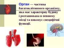 Орган — частина багатоклітинного організму, яка має характерну будову і розта...